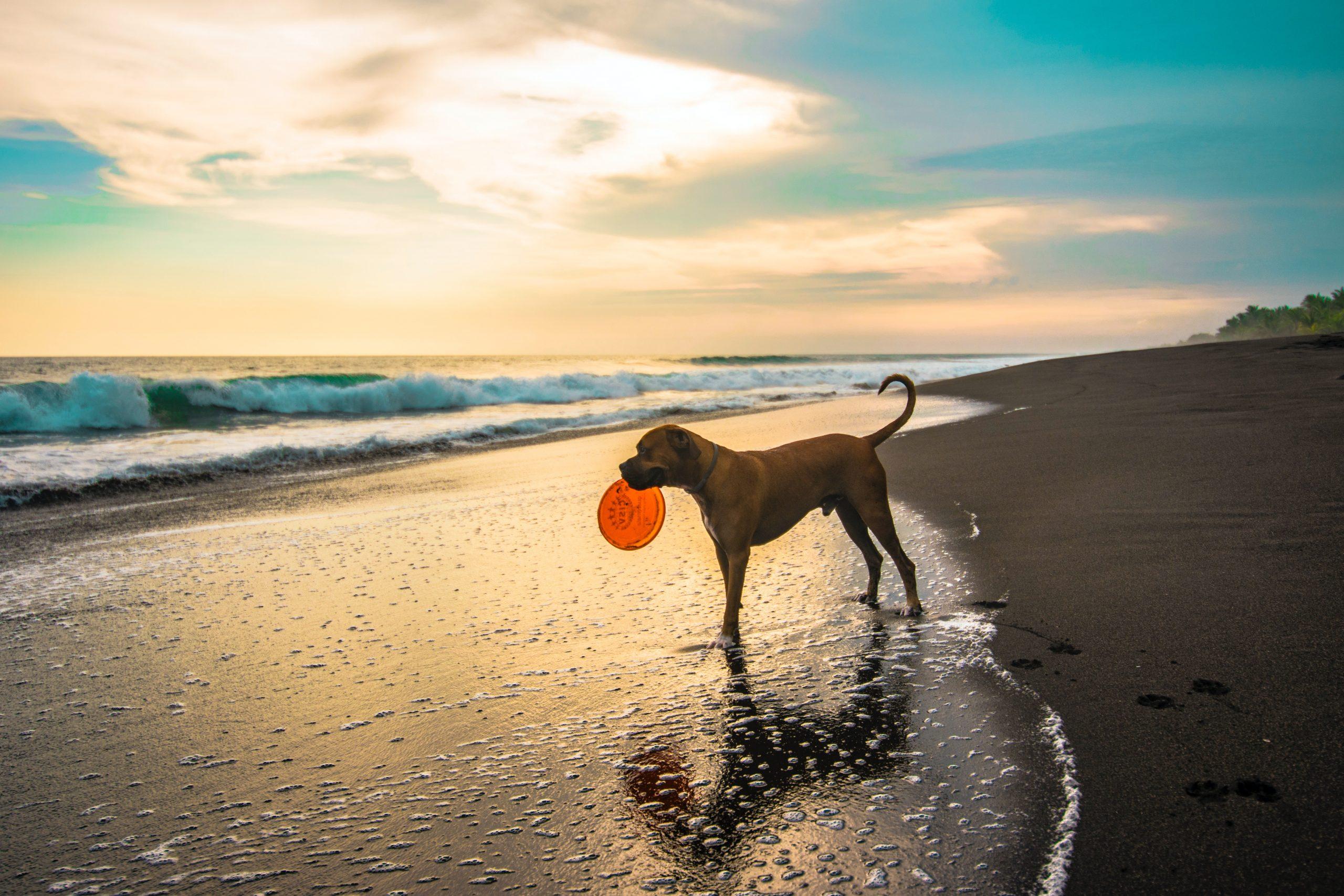 spiaggia libera cani pesaro